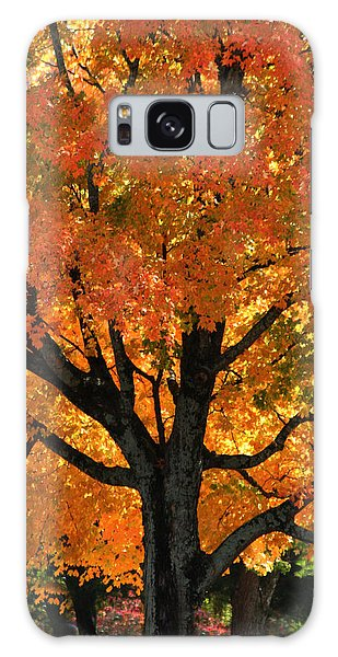 Maple Hill Maple In Autumn Galaxy Case