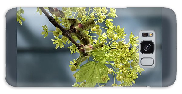 Maple Tree Flowers 2 - Galaxy Case