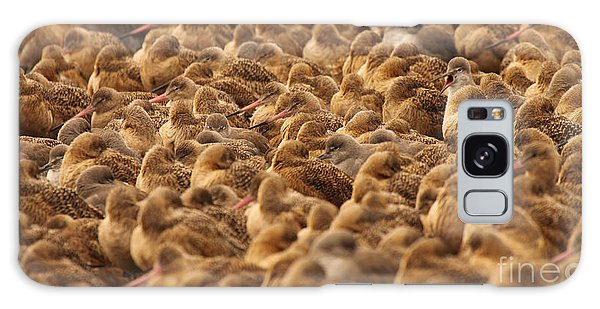 Marbled Godwit Trying To Stick Out From The Flock Galaxy Case by Max Allen