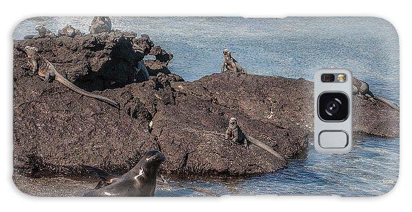 Marine Iguanas And Sealion Pup At Punta Espinoza Fernandina Island Galapagos Islands Galaxy Case
