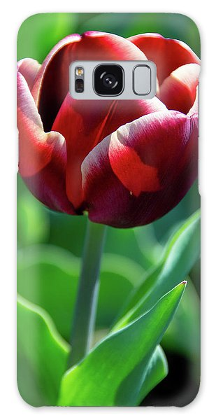 Maroon Tulip Galaxy Case