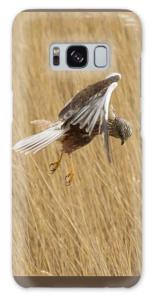 Marsh Harrier Hunting Galaxy Case