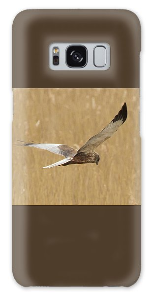 Marsh Harrier Quartering Galaxy Case