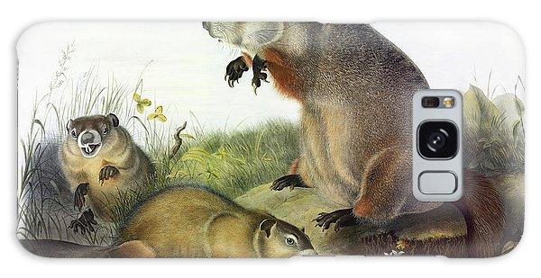 Groundhog Galaxy Case - Maryland Marmot, Woodchuck, Groundhog by John James Audubon