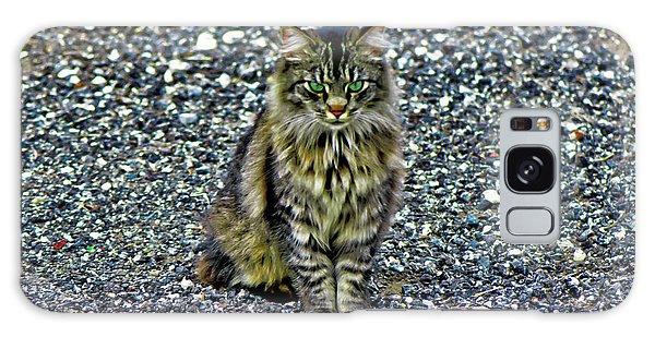 Mattie The Main Coon Cat Galaxy Case