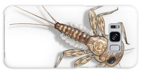 Mayfly Larva Nymph Rithorgena Ecdyonurus Venosus - Moscas De May Galaxy Case