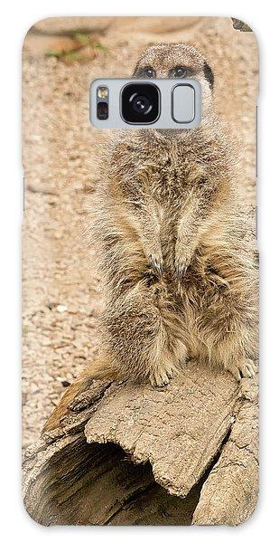 Meerkat Galaxy Case