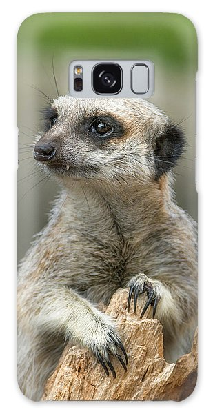 Meerkat Galaxy S8 Case - Meerkat Model by Racheal  Christian