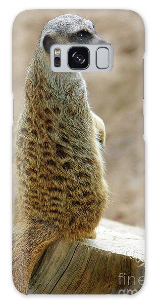 Meerkat Galaxy S8 Case - Meerkat Portrait by Carlos Caetano