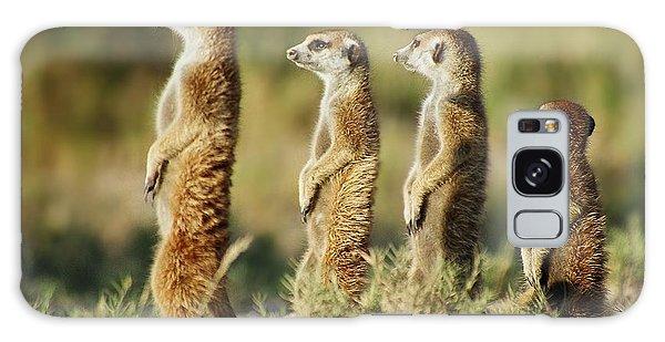 Meerkat Stairsteps Galaxy Case