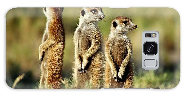 Meerkats Three Galaxy Case