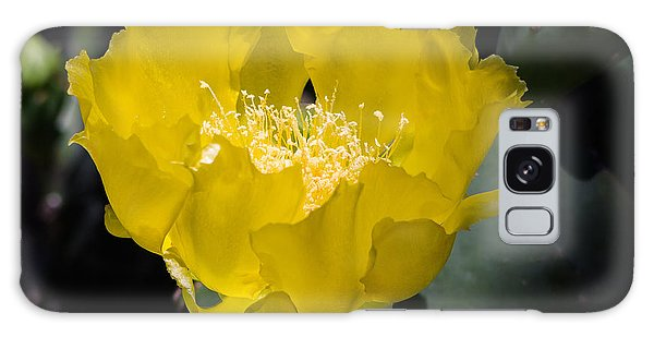 Mellow Yellow Cactus Flower Galaxy Case