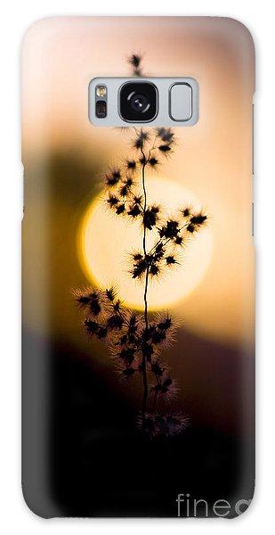 Desert Flora Galaxy Case - Mexican Desert Sunset by Jorgo Photography - Wall Art Gallery