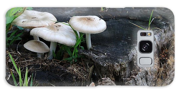 Mid Summers Fungi Galaxy Case