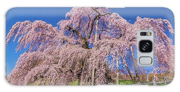 Galaxy Case featuring the photograph Miharu Takizakura Weeping Cherry31 by Tatsuya Atarashi