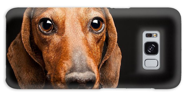 Galaxy Case featuring the photograph Mike The Dachshund by SR Green