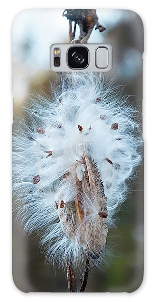 Milkweed And Its Seeds Galaxy Case by Chris Flees