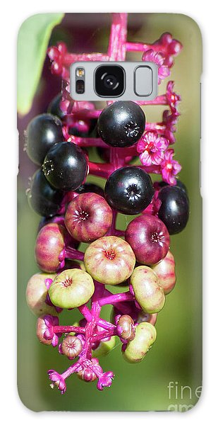 Mixed Berries On Branch Galaxy Case