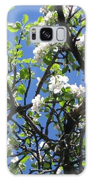 Mn Apple Blossoms Galaxy Case by Barbara Yearty