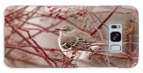Mockingbird In Winter Rose Bush Galaxy Case