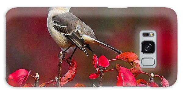 Mockingbird On Red Galaxy Case