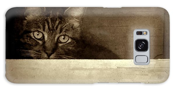 Mollie In A Box Galaxy Case by Patricia Strand