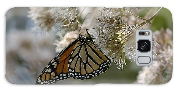 Monarch Pink Galaxy Case by Randy Bodkins