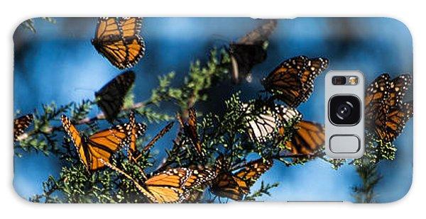 Monarchs Galaxy Case