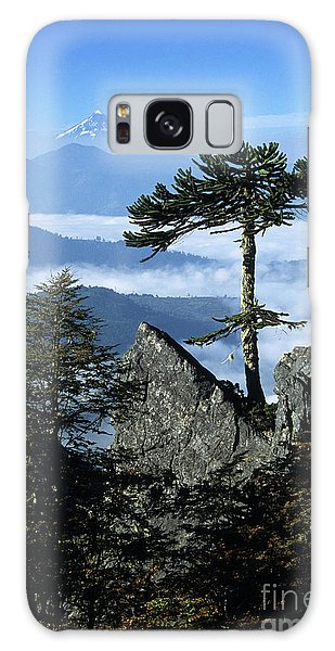 Monkey Puzzle Trees In Huerquehue National Park Galaxy Case