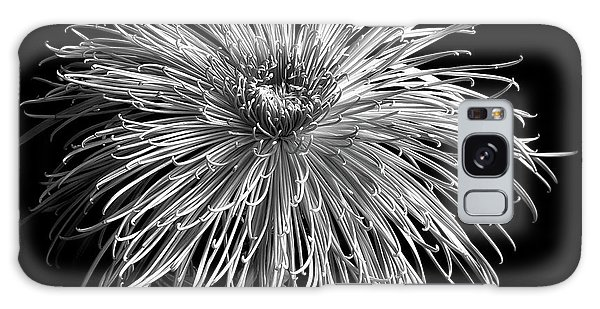 Galaxy Case featuring the photograph Monochrome Of Chrysanthemum 'pink Splendor' by Ann Jacobson