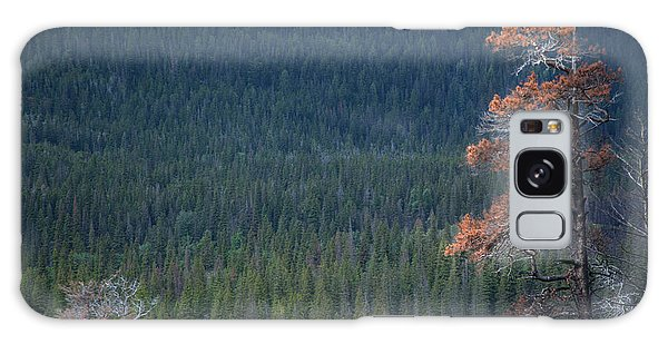 Montana Tree Line Galaxy Case