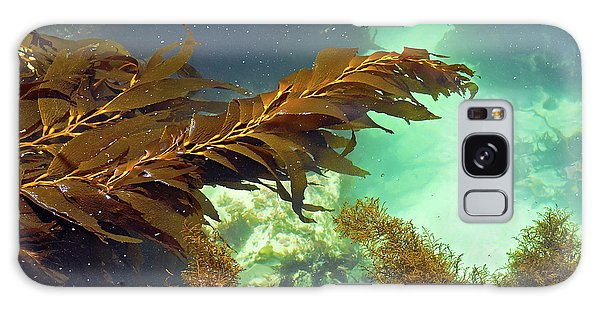 Monterey Bay Seaweed Galaxy Case