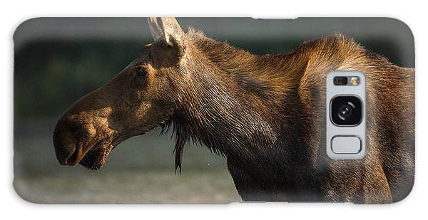 Moose Portrait // Glacier National Park  Galaxy Case