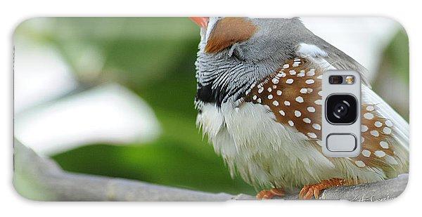 Morning Bird Galaxy Case