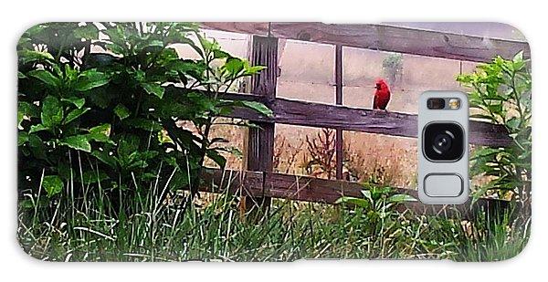 Morning Cardinal Galaxy Case