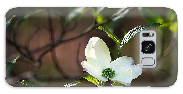 Morning Dogwood At Buffalo River Trail Galaxy Case