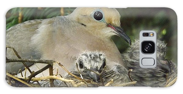 Morning Dove And Two Babys Galaxy Case