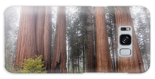 Galaxy Case featuring the photograph Morning Light In The Forest by Peggy Hughes