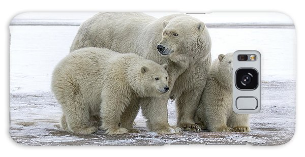 Mother And Cubs In The Arctic Galaxy Case