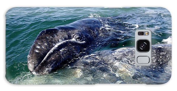 Mother Grey Whale And Baby Calf Galaxy Case