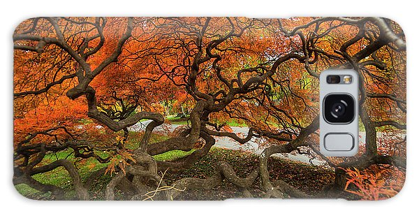Mount Auburn Cemetery Beautiful Japanese Maple Tree Orange Autumn Colors Branches Galaxy Case