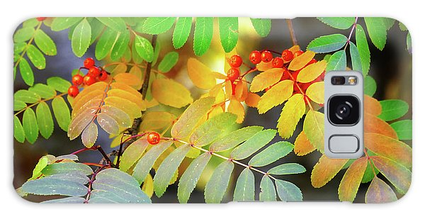 Mountain Ash Fall Color Galaxy Case by Michele Penner