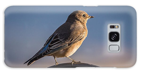 Mountain Bluebird At Sunset Galaxy Case