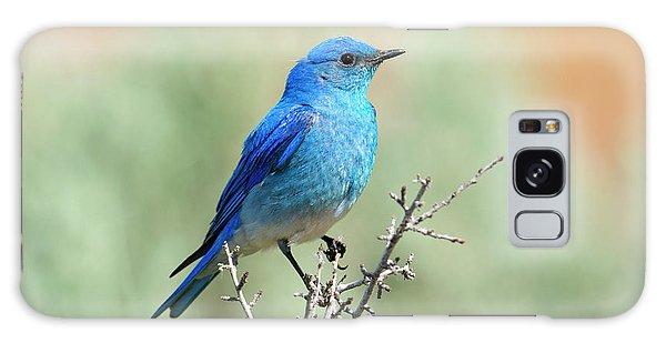 Bluebird Galaxy Case - Mountain Bluebird Beauty by Mike Dawson