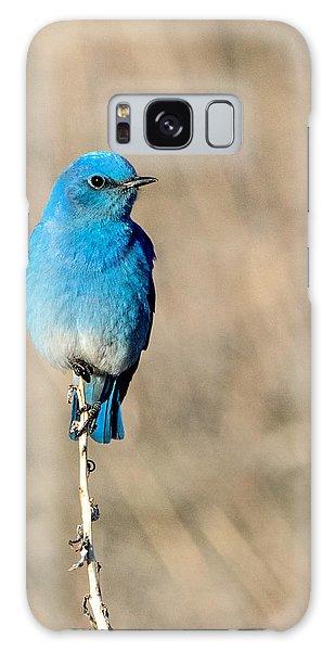 Mountain Bluebird On A Stem. Galaxy Case