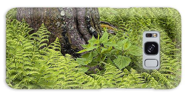 Mountain Green Ferns Galaxy Case
