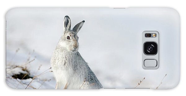 Mountain Hare Sitting In Snow Galaxy Case
