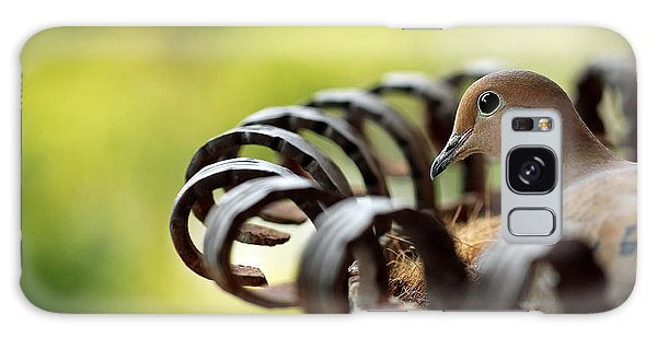 Mourning Dove In A Flower Planter Galaxy Case by Debbie Oppermann