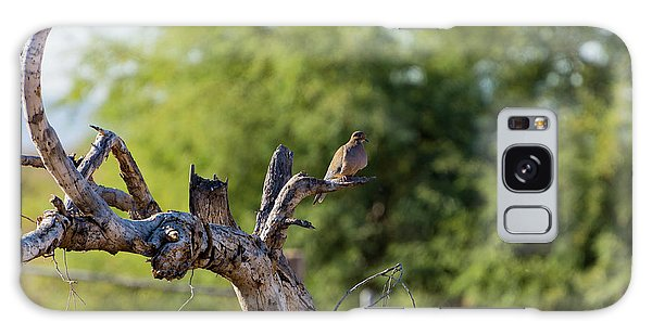 Mourning Dove In Old Tree Galaxy Case