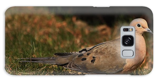 Mourning Dove Spring 2012 Galaxy Case
